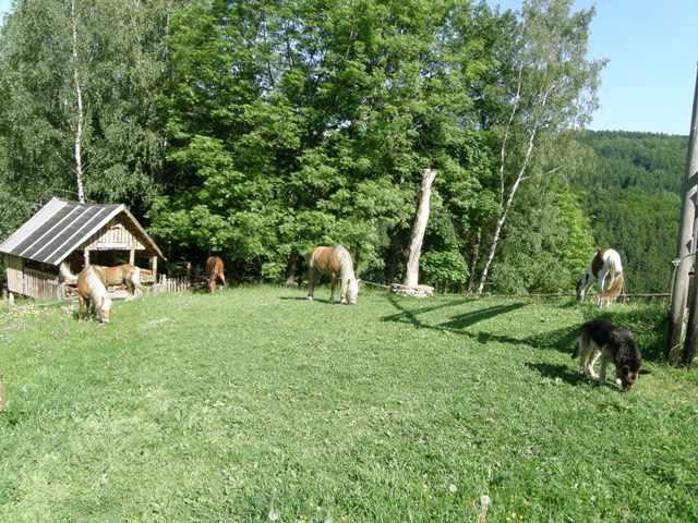 Koníci a Bareček
