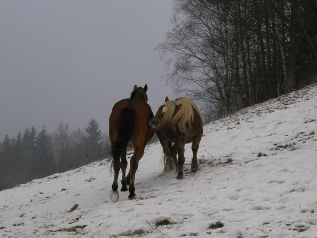 Koňská hra (Megan a Sunny)
