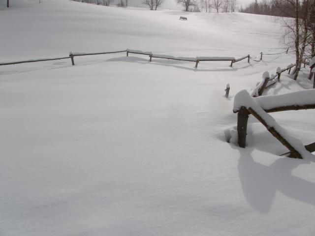 trošku snížku - kde jsou ohrady?